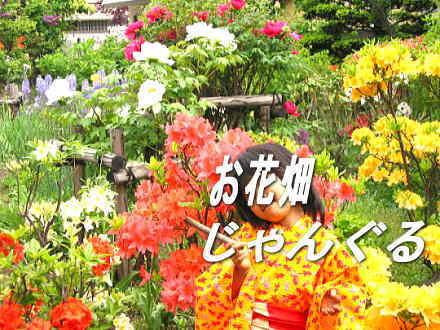 f:id:mamiko88:20080323171347j:image