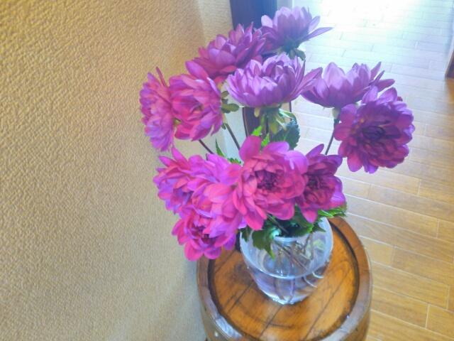 切り花のダリア画像