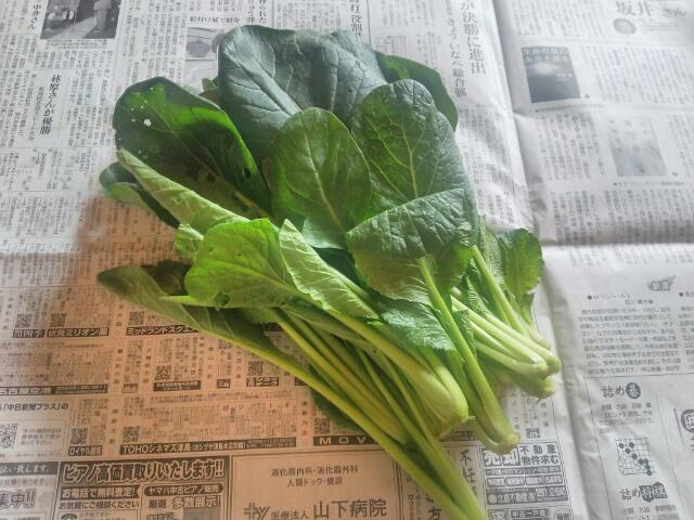 小松菜画像