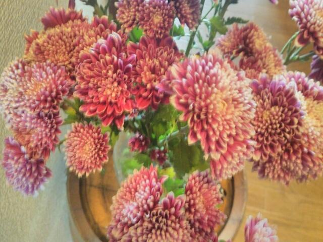 玄関に飾った菊画像