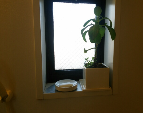 ニトリの 植木鉢 皿付きプランター4号に植え換えた子宝草画像