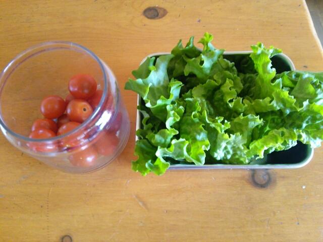 洗っただけのレタスとミニトマト画像