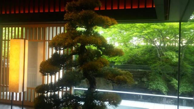 リッツカールトン京都 ロビー 松の木