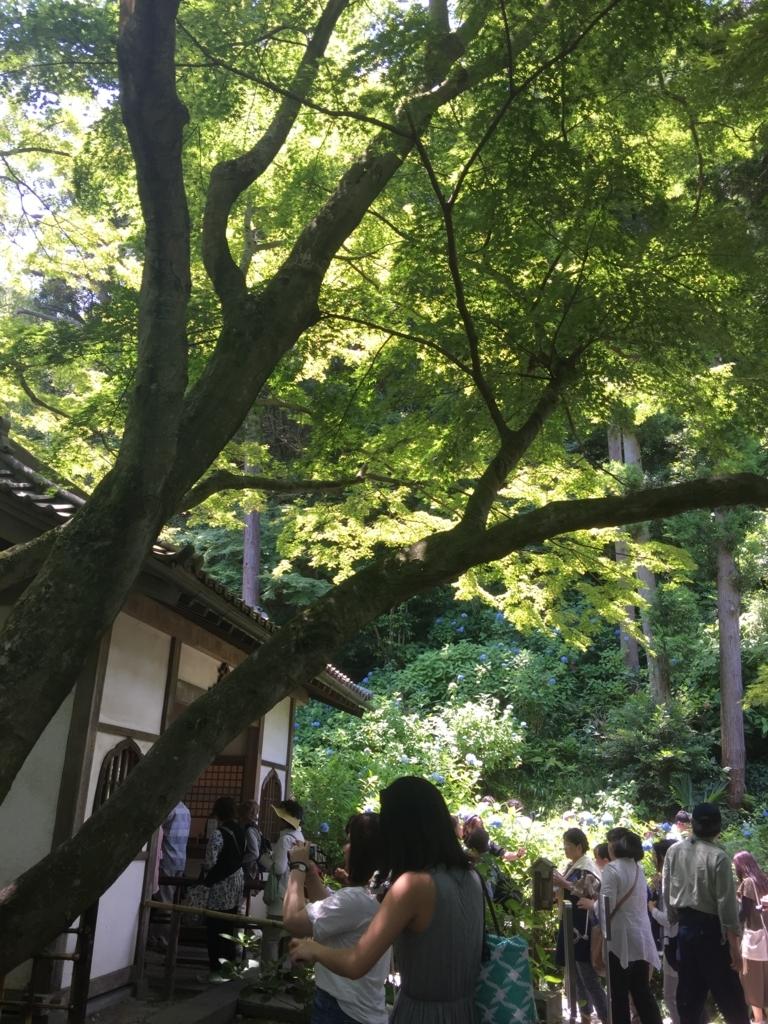 f:id:mamiwakatuki:20170611110353j:plain