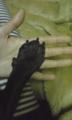 手をつなぐ。