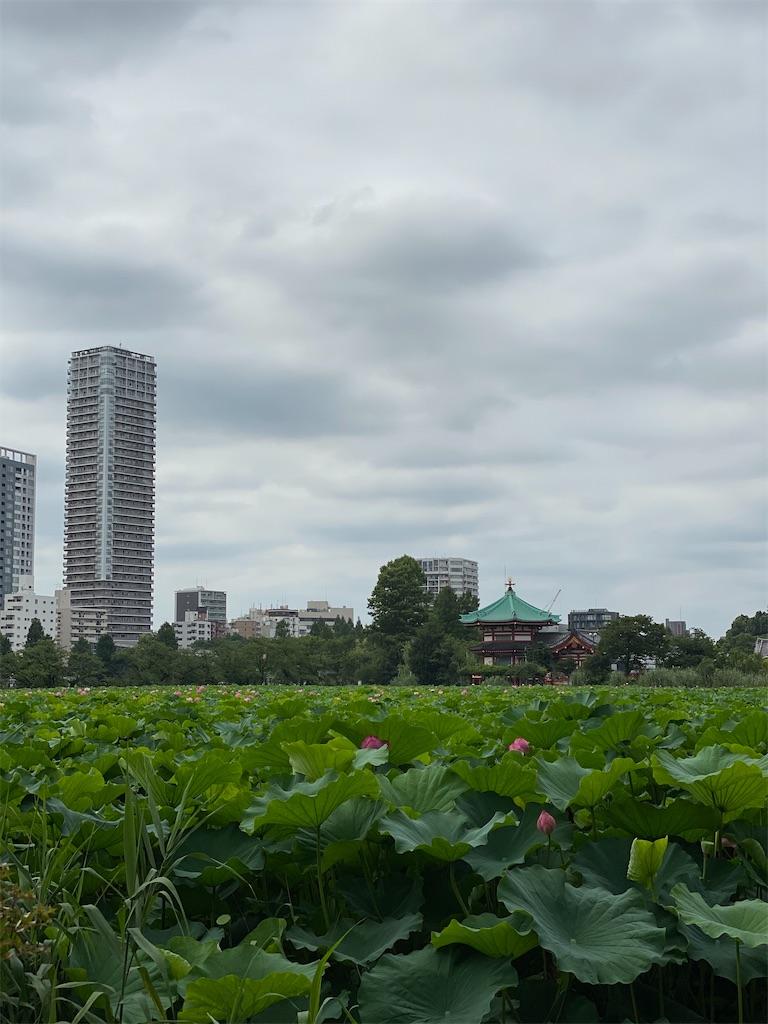 f:id:man_chan:20200806101742j:image