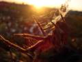 [insect][蛛形綱 | Arachnida]