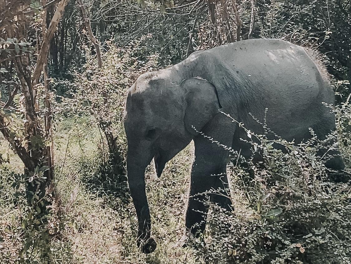 スリランカのサファリ体験