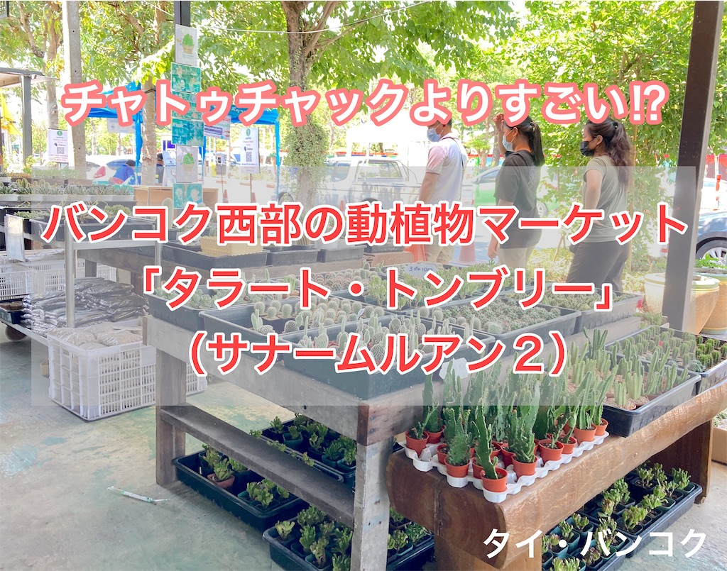 f:id:manao-life:20210310172927j:image