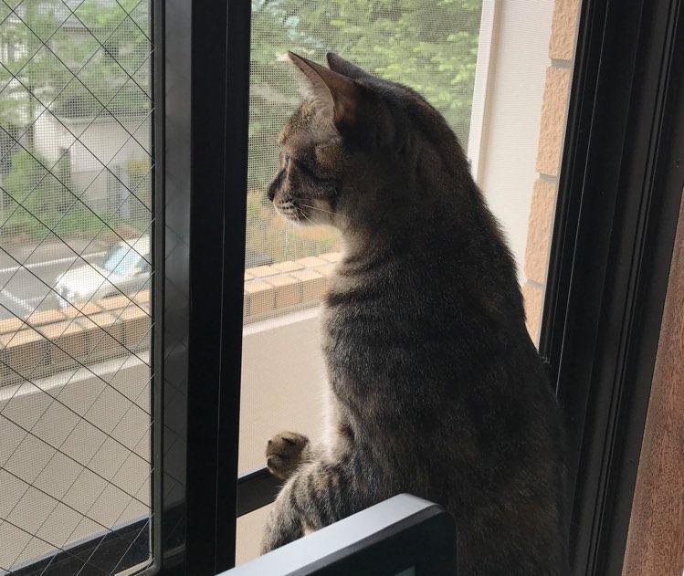 外をみる猫