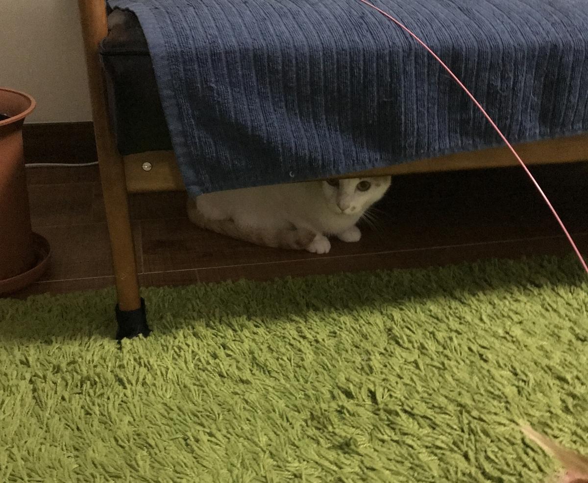ソファーの下に隠れるごえもん