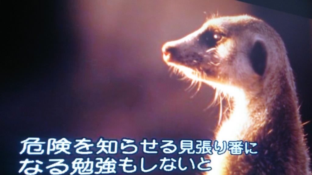 f:id:mangetsuyama:20170127005435j:plain