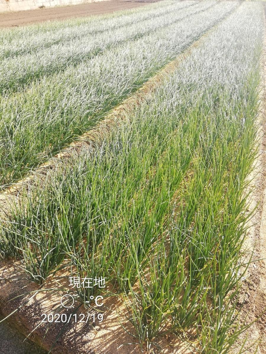 f:id:manimani-farm:20201219235914j:plain