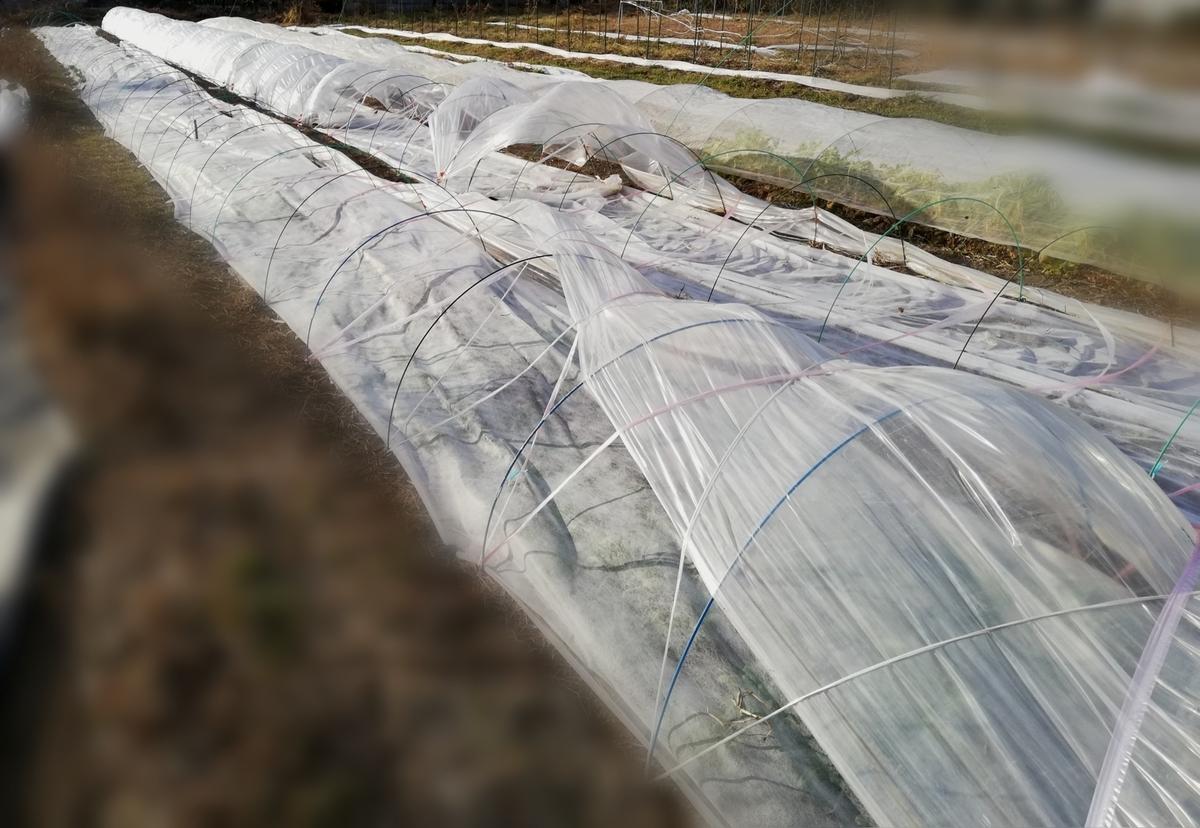 f:id:manimani-farm:20210108213020j:plain