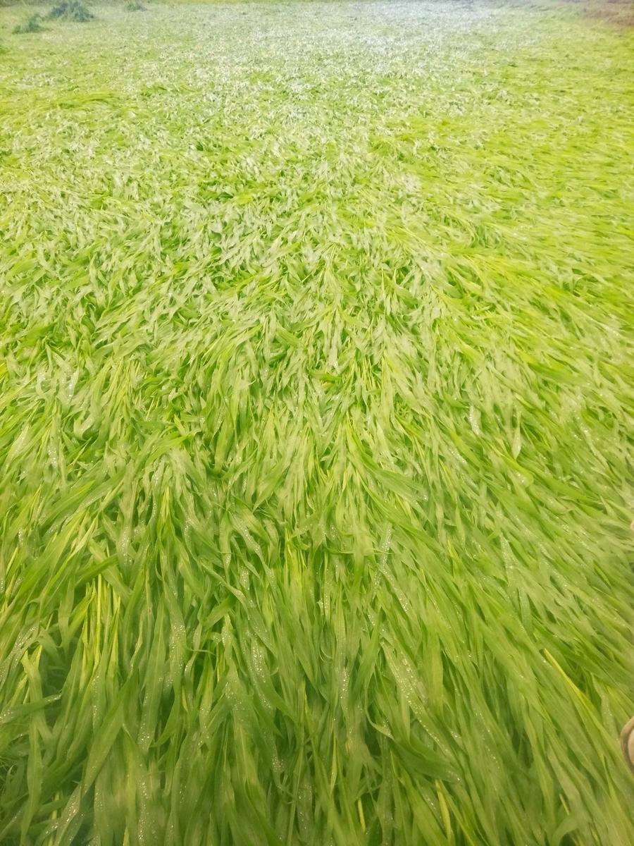 f:id:manimani-farm:20210711214645j:plain
