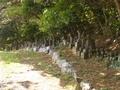 20150617 高山稲荷神社⑦(つがる市牛潟町)