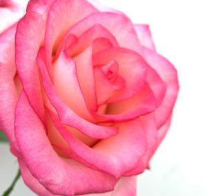 f:id:many-2-flowers:20190407221454j:plain