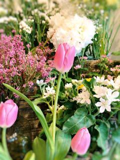 f:id:many-2-flowers:20190411213308j:plain