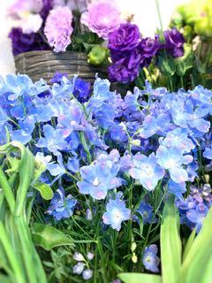 f:id:many-2-flowers:20190411213520j:plain