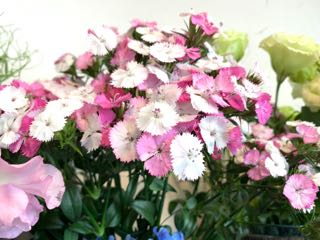 f:id:many-2-flowers:20190413205640j:plain