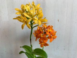f:id:many-2-flowers:20190413210155j:plain