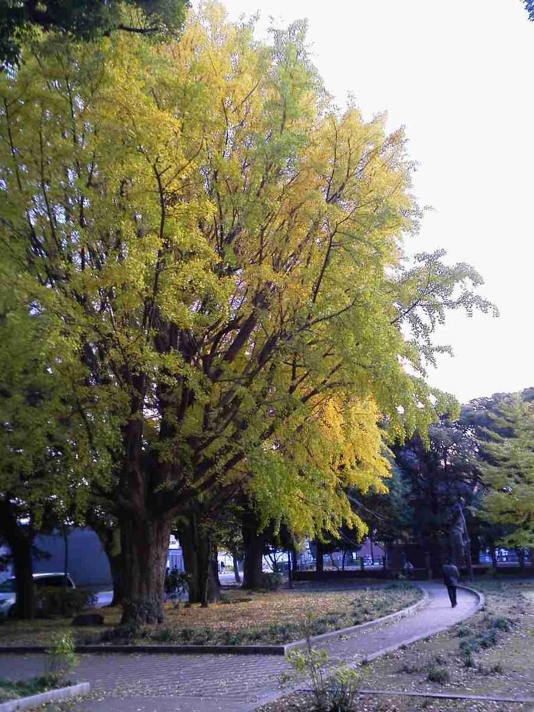f:id:maosuke1225:20160617073634j:plain