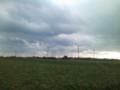 三浦半島の大根畑&風車