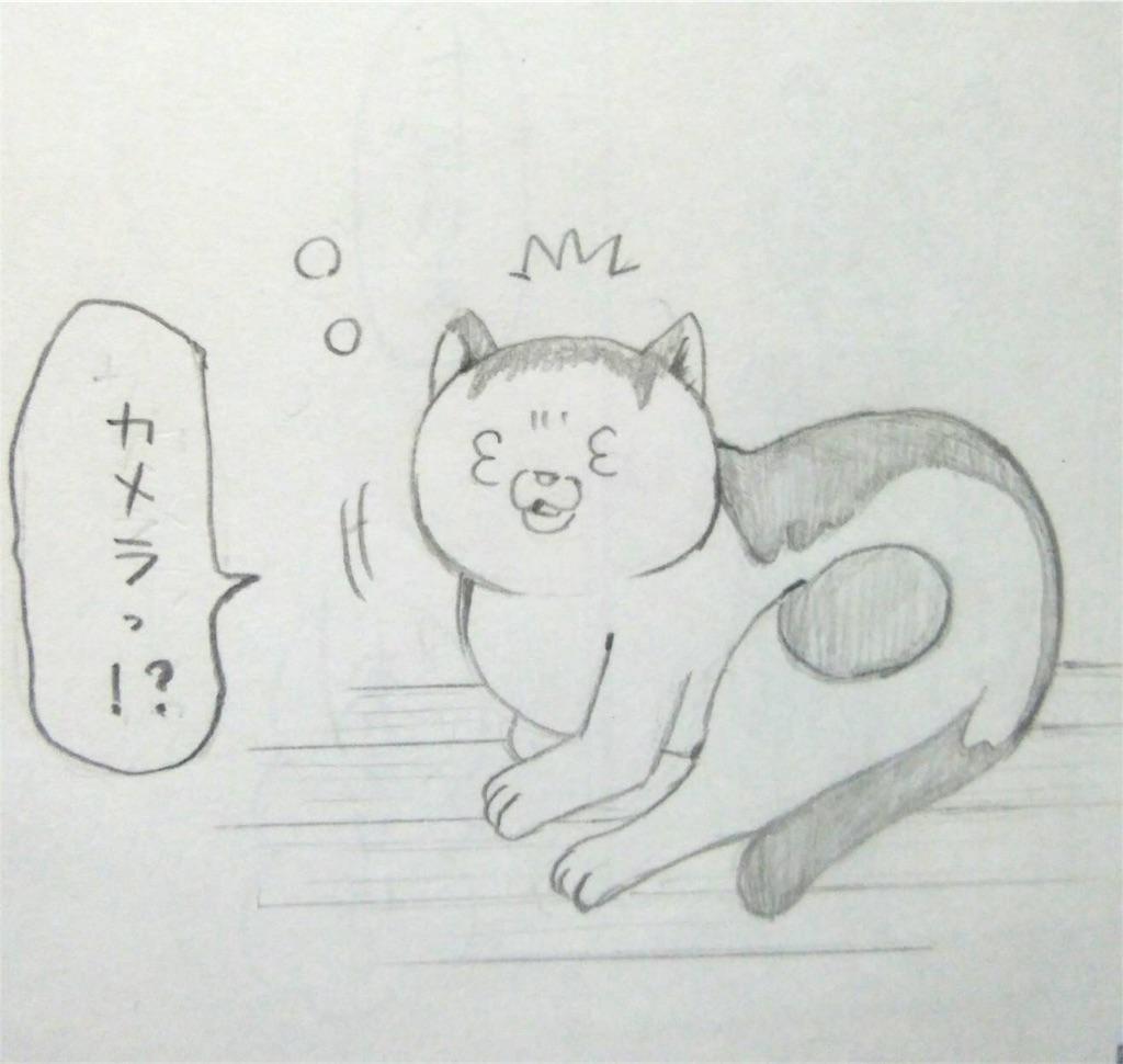 f:id:maricats:20190530231213j:image