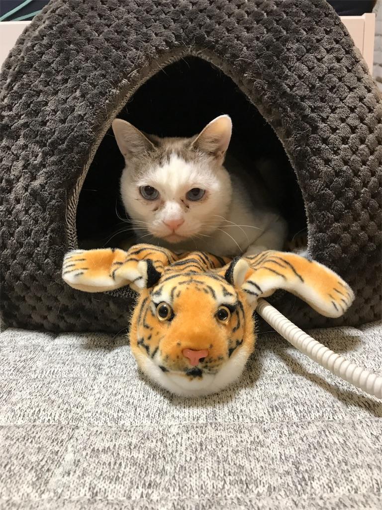 f:id:maricats:20190612084830j:image