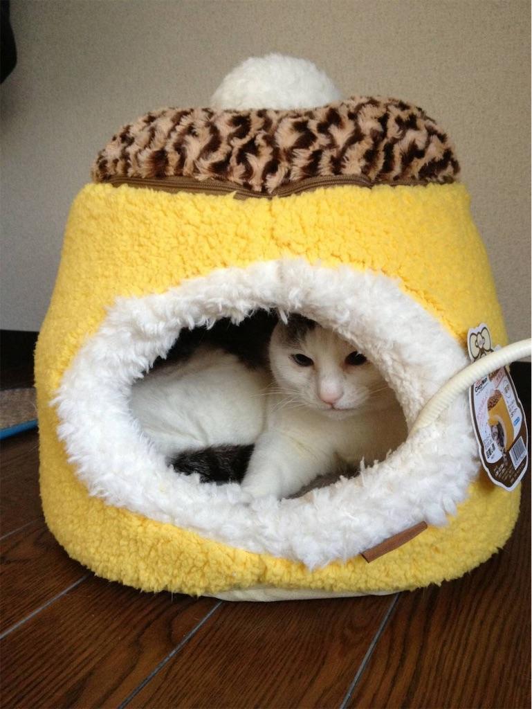 f:id:maricats:20190622220126j:image