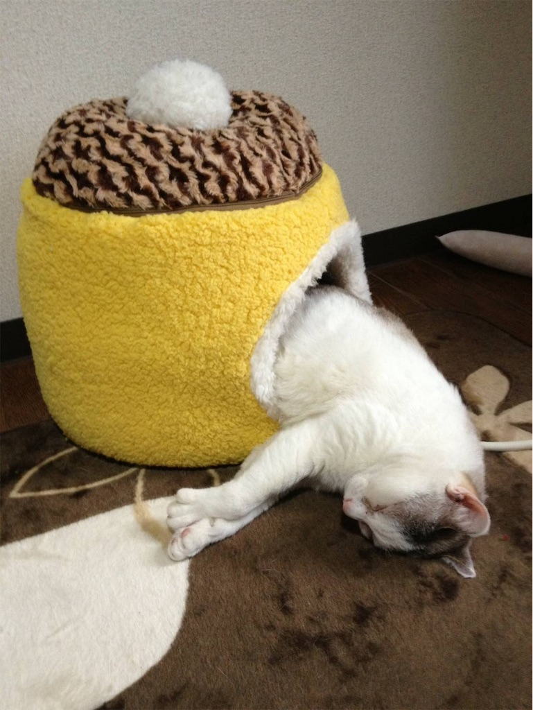 f:id:maricats:20190622220132j:image