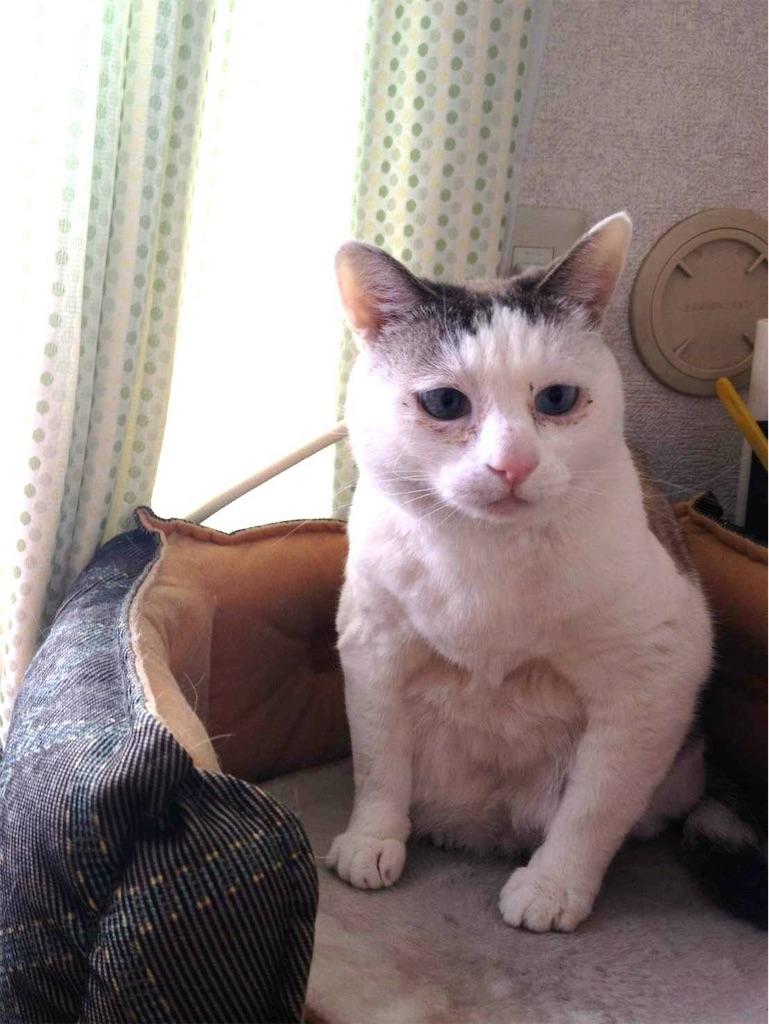 f:id:maricats:20190702174845j:image