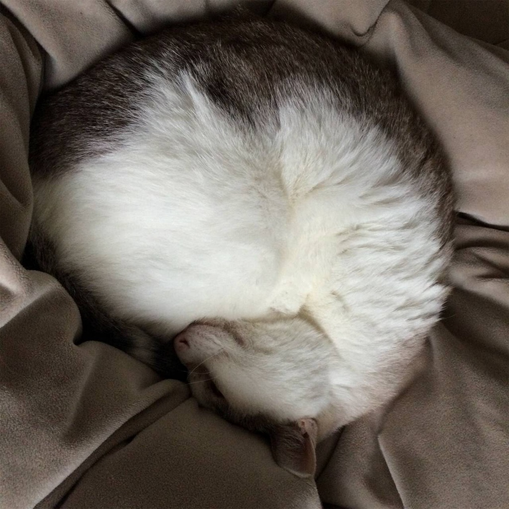 f:id:maricats:20190702174849j:image