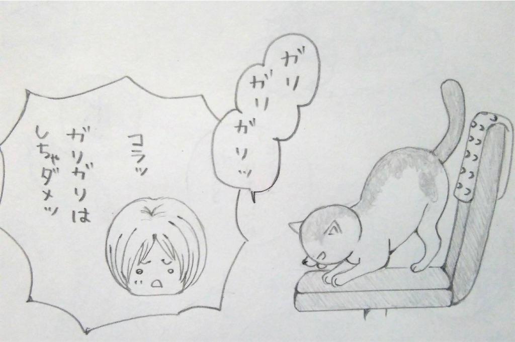 f:id:maricats:20190706135906j:image