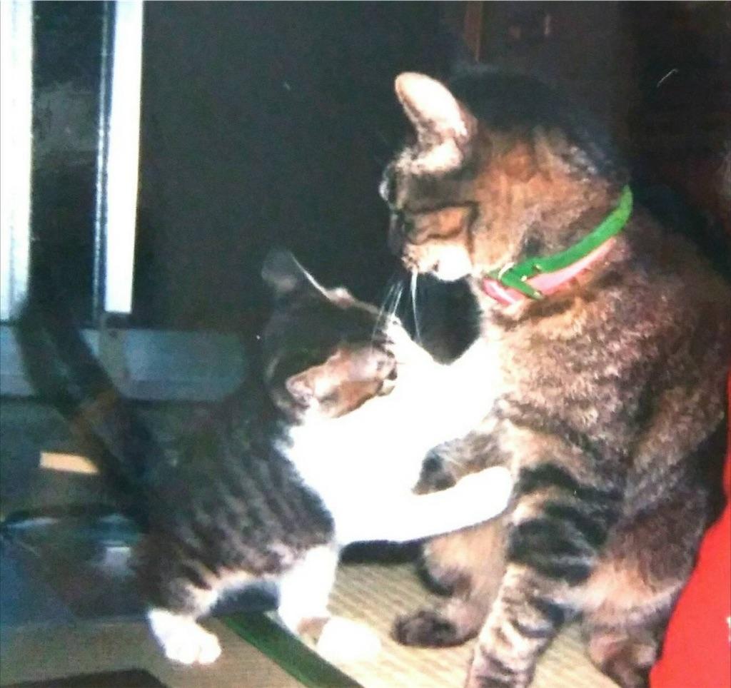 f:id:maricats:20190715192812j:image
