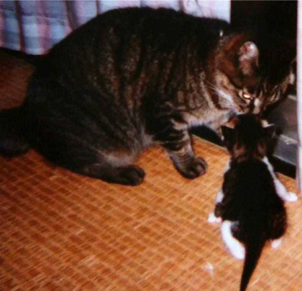 f:id:maricats:20190715192815j:image
