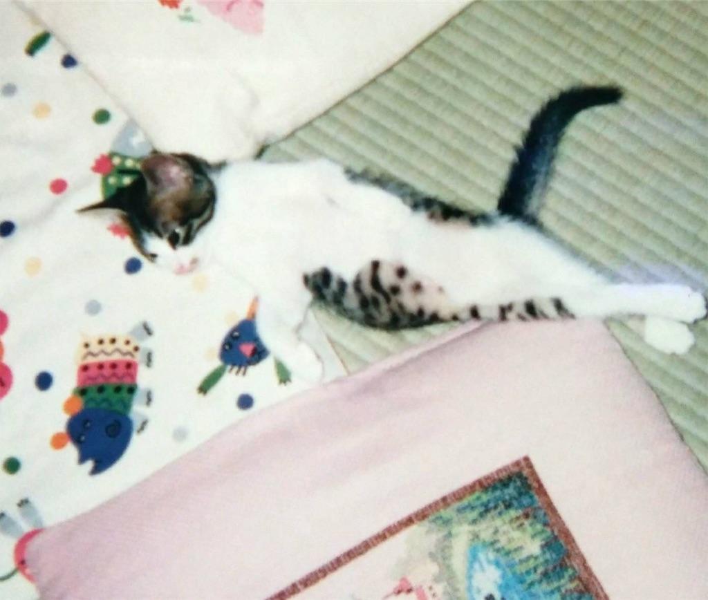 f:id:maricats:20190718153445j:image