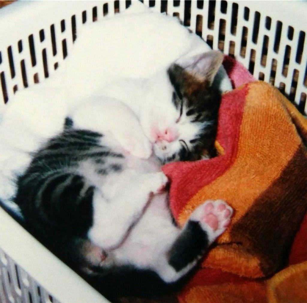 f:id:maricats:20190718153448j:image