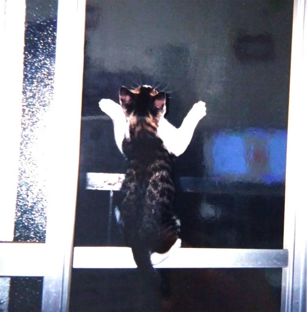f:id:maricats:20190718153502j:image