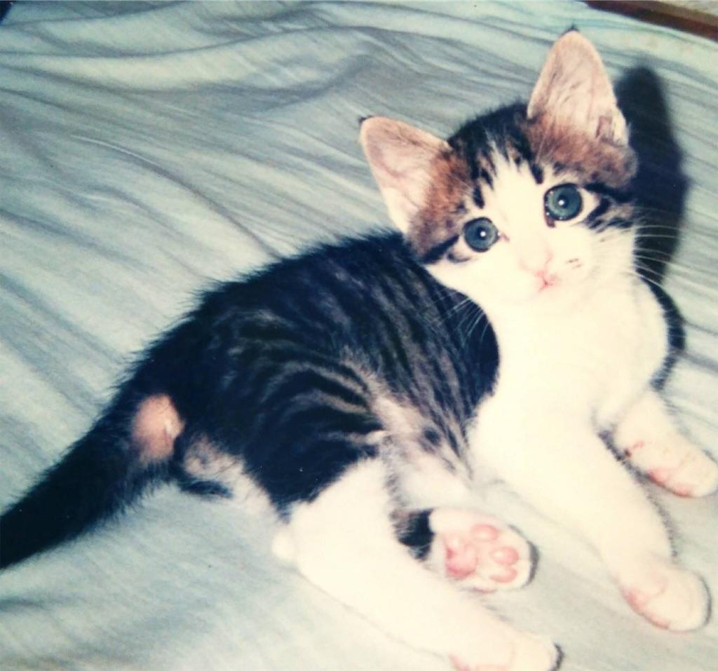 f:id:maricats:20190725170136j:image