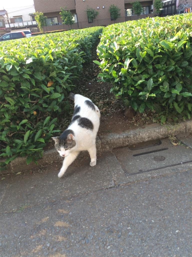 f:id:maricats:20190815083716j:image