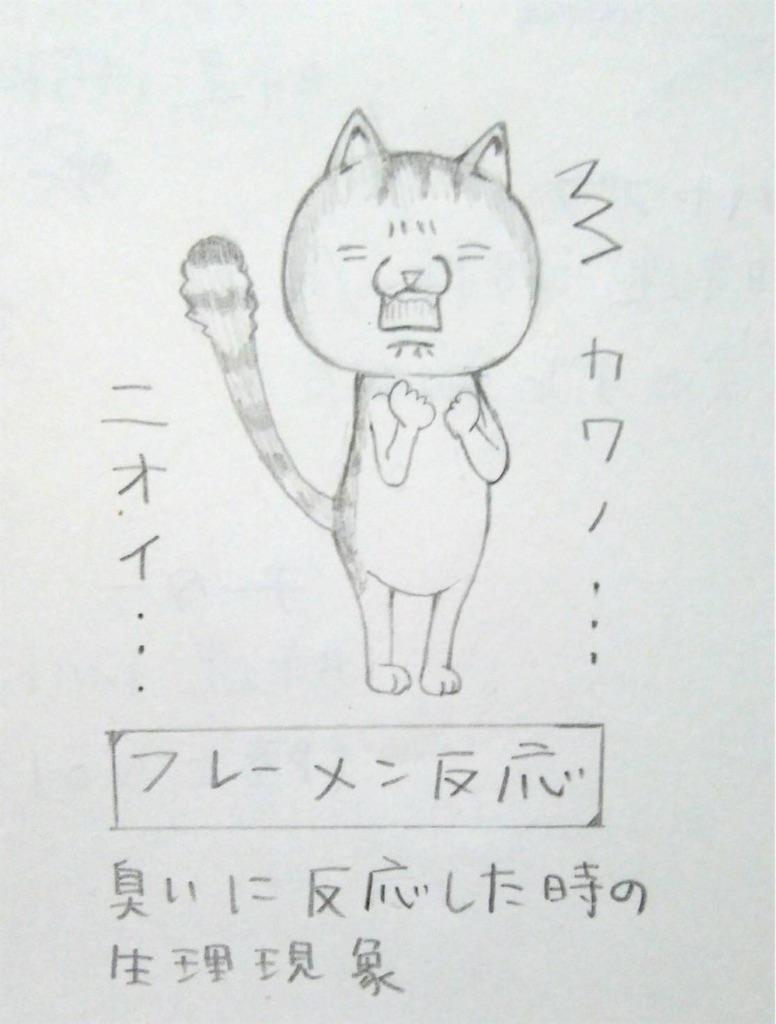 f:id:maricats:20191007192134j:image