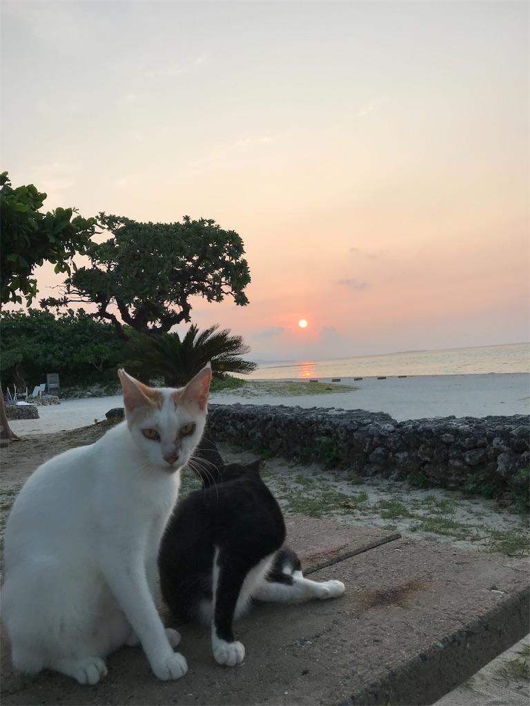 f:id:maricats:20191009220232j:image