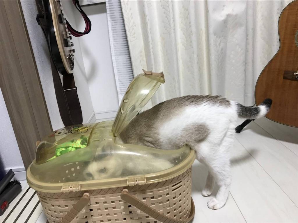 f:id:maricats:20191206234411j:image
