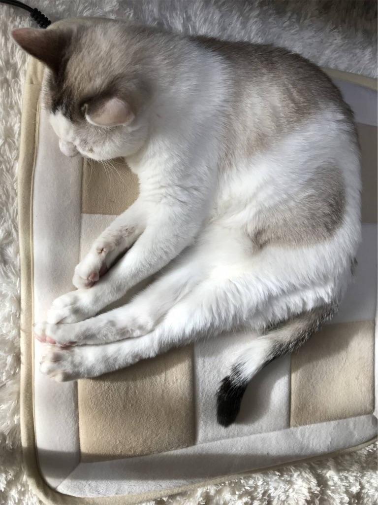 f:id:maricats:20191209210101j:image