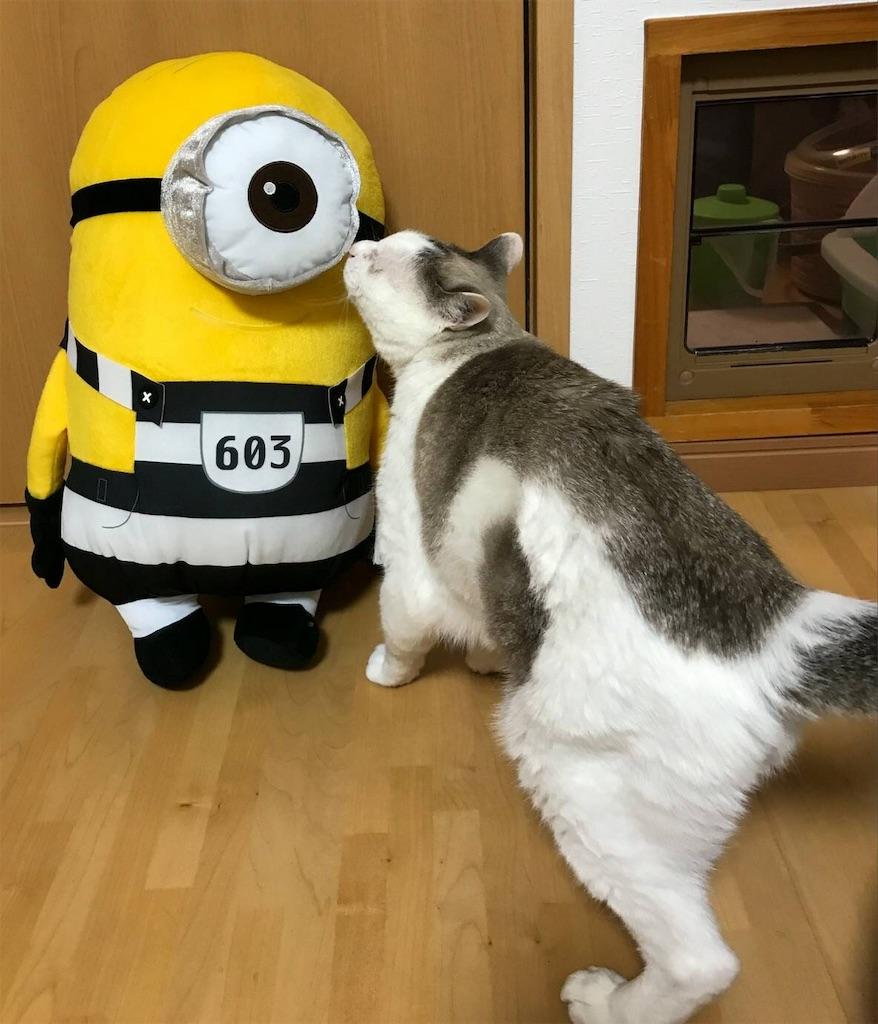 f:id:maricats:20191209210110j:image
