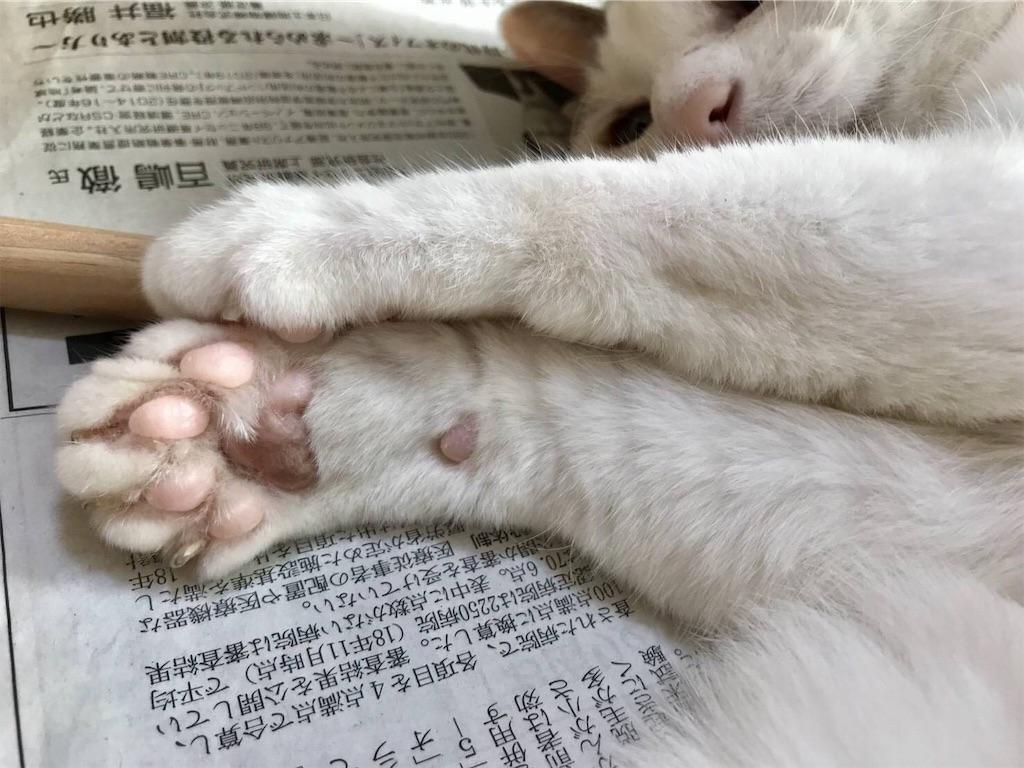 f:id:maricats:20191209210137j:image