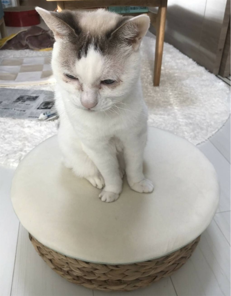 f:id:maricats:20191209210142j:image