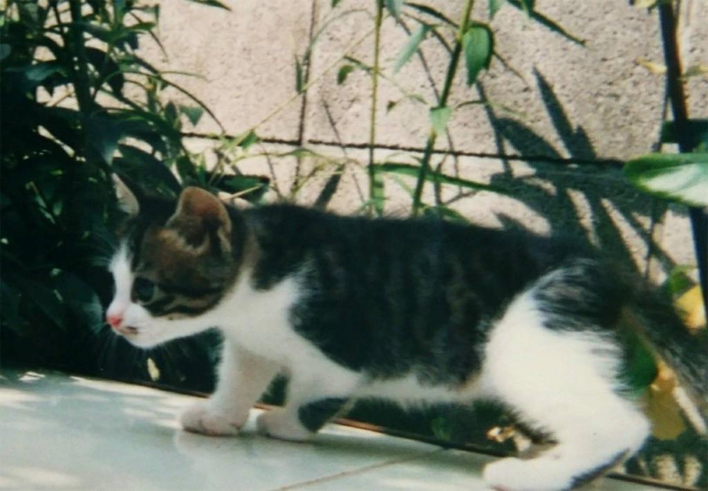 f:id:maricats:20200119201029j:image