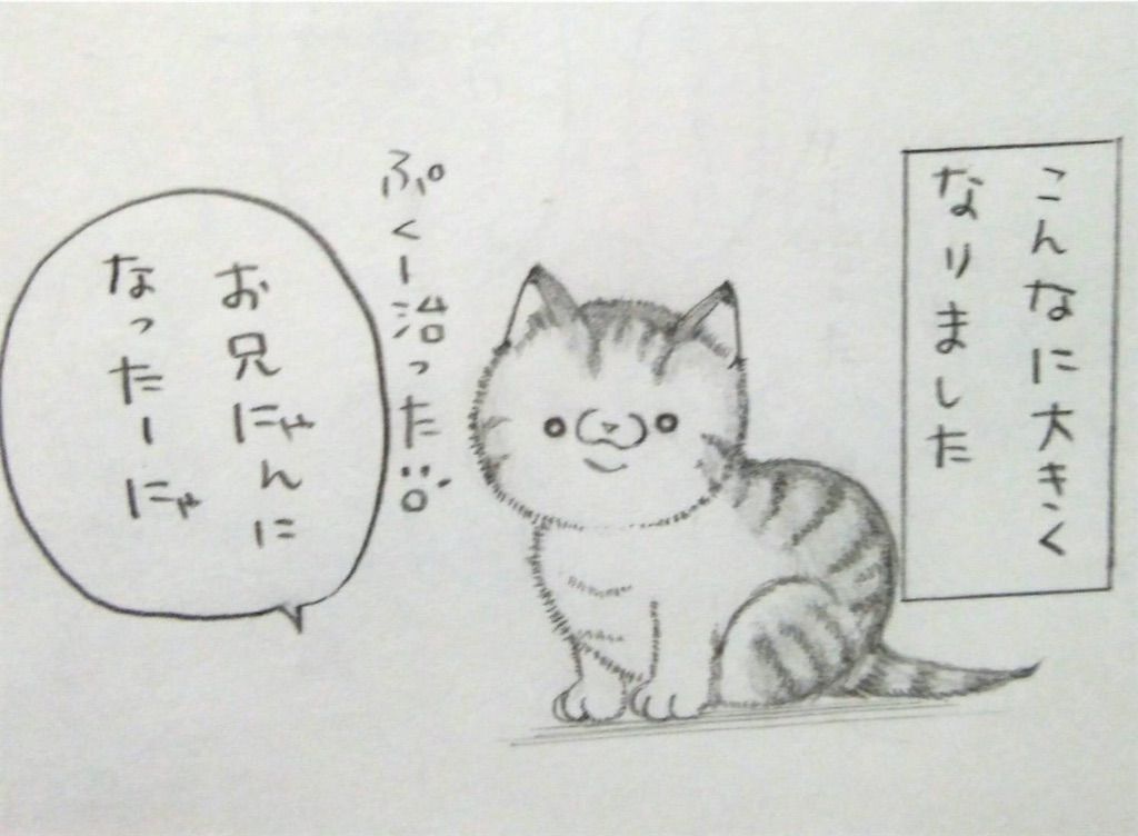 f:id:maricats:20200127190948j:image